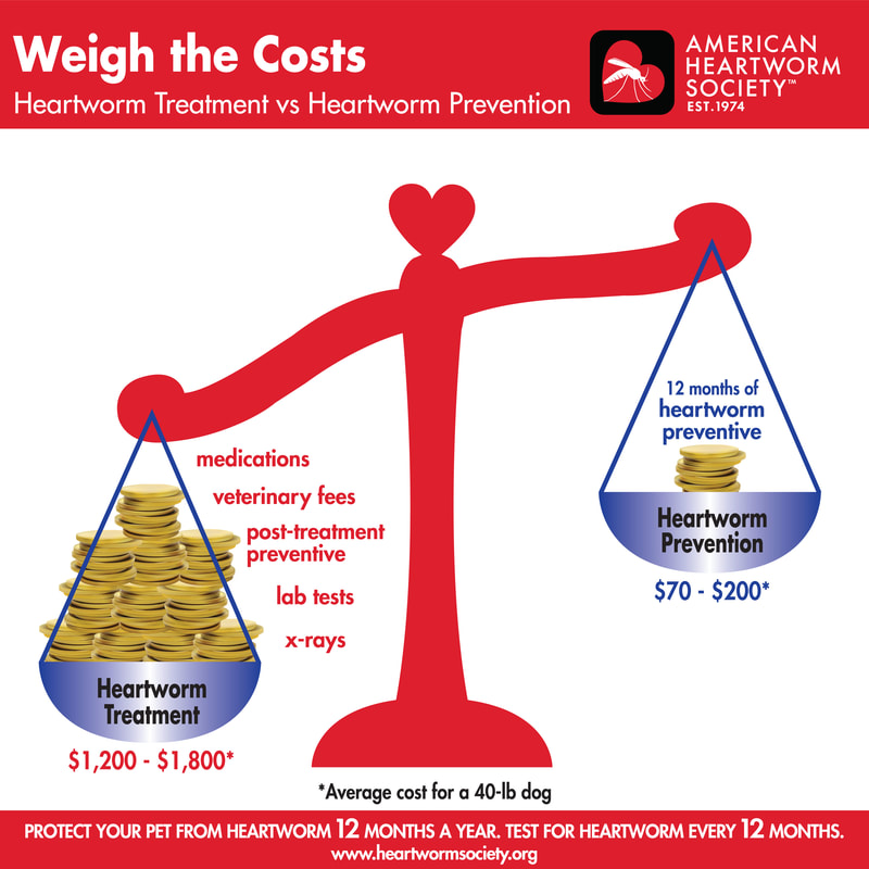 Weight the costs - heartworm treatment vs prevention